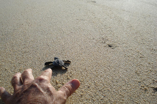 turtle-release4